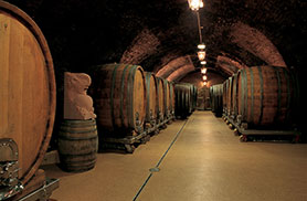 wine cellar with large barrels